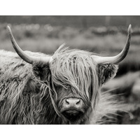 Canvas Print - Fringe Friday Bovine - 90x70