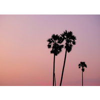 Canvas Print - Dusty Palm Sunset Cluster - 70x50
