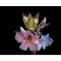 Canvas Print - Midnight Bouquet - 100x80