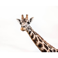 Canvas Print - Hello There - Giraffe - 100x80