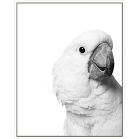 Floating Frame- 100 x 80 - Curious Cockatoo