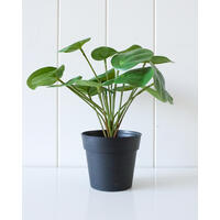 Artificial Plant - Chinese Money Plant - 26x25.5cm (MIN 2)