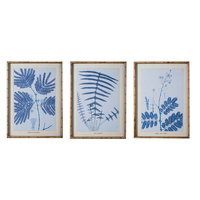 Premium Framed Art - Minosa and Dandelion - Set of 3