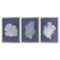 Premium Framed Art - Navy Coral with Aged Timber B - Set of 3
