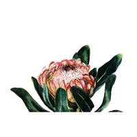 Medium Canvas Print - Blooming Protea  (MIN 2) 60x40